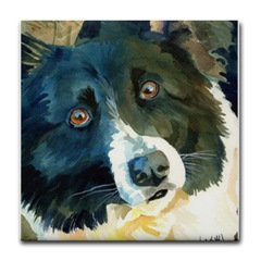 Black and White Border Collie Head Study