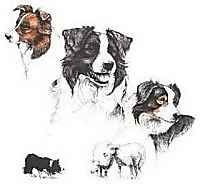 border collie laura rogers design
