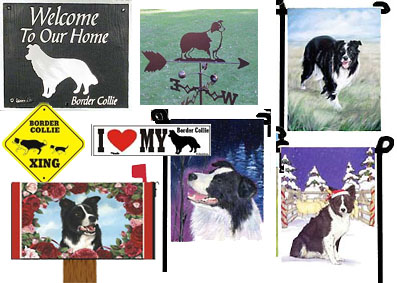 Border Collies Outdoors