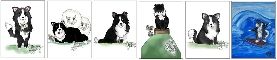 funny border collies