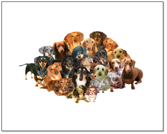 World of Dachshunds