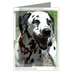 Dalmatian Rescue Greeting Cards