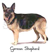german shepherd dog tshirt and sweaters