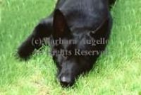 Black German Shepherd Doormat
