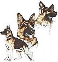 german shepherd dog apparel