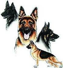 german shepherd dog cloths