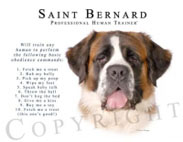 Saint Bernard tshirt sweater
